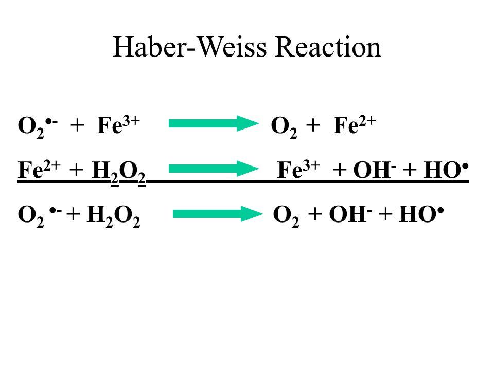 O 2  - + Fe 3+ O 2 + Fe 2+ Fe 2+ + H 2 O 2 Fe 3+ + OH - + HO  O 2  - + H 2 O 2 O 2 + OH - + HO  Haber-Weiss Reaction