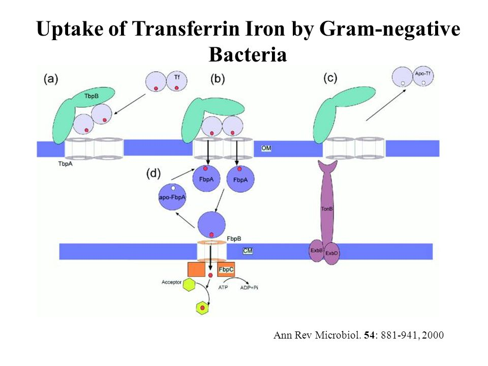 Uptake of Transferrin Iron by Gram-negative Bacteria Ann Rev Microbiol. 54: 881-941, 2000