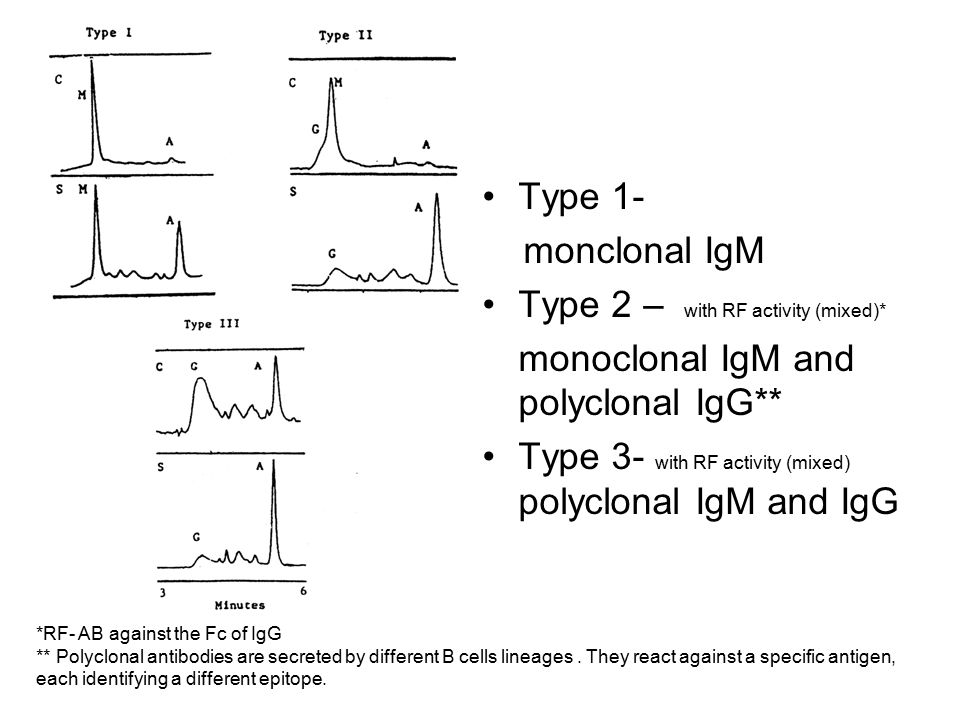 Type 1- monclonal IgM Type 2 – with RF activity (mixed)* monoclonal IgM and polyclonal IgG** Type 3- with RF activity (mixed) polyclonal IgM and IgG *RF- AB against the Fc of IgG ** Polyclonal antibodies are secreted by different B cells lineages.