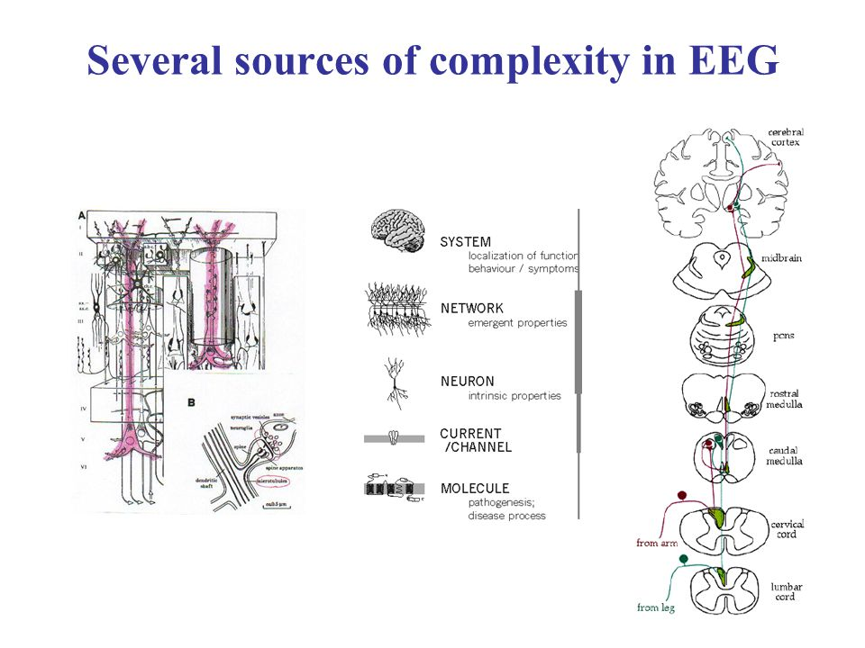 Several sources of complexity in EEG