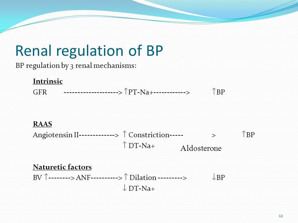 12 Renal regulation of BP Intrinsic GFR -------------------->  PT-Na+------------>  BP RAAS Angiotensin II------------->  Constriction----->  BP  DT-Na+ Naturetic factors BV  --------> ANF---------->  Dilation --------->  BP  DT-Na+ Aldosterone BP regulation by 3 renal mechanisms: