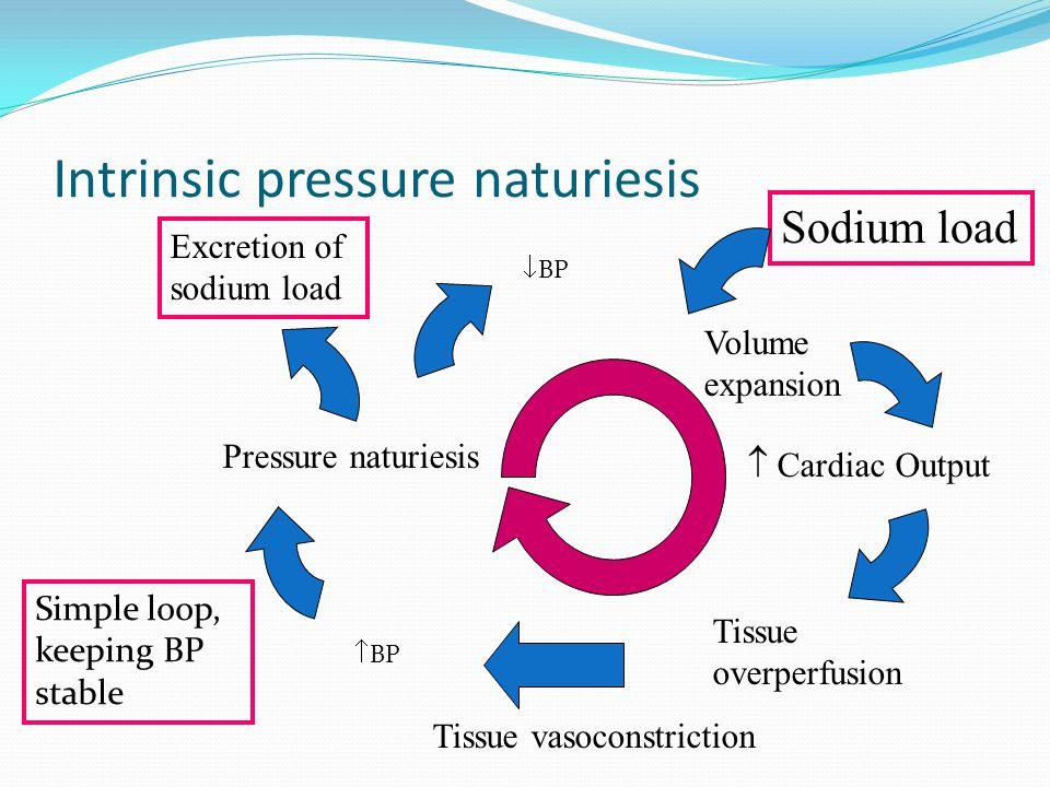 Intrinsic pressure naturiesis Sodium load Volume expansion  Cardiac Output Excretion of sodium load Tissue overperfusion  BP Tissue vasoconstriction Pressure naturiesis  BP Simple loop, keeping BP stable