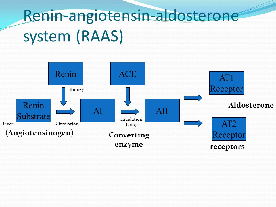 Renin-angiotensin-aldosterone system (RAAS) Renin Substrate AIAII AT1 Receptor ACERenin Converting enzyme receptors AT2 Receptor (Angiotensinogen) Kidney Liver Circulation Lung Circulation Aldosterone
