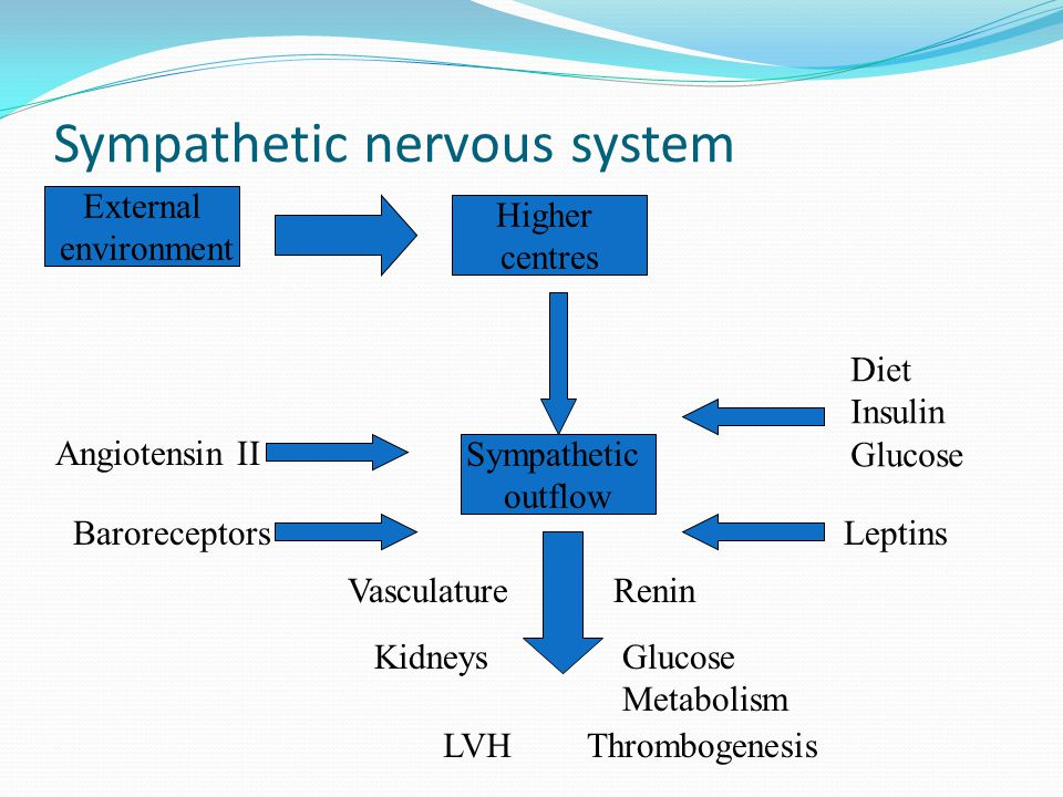 Sympathetic nervous system Sympathetic outflow Higher centres External environment Baroreceptors Angiotensin II Diet Insulin Glucose Leptins Vasculature LVH Kidneys Thrombogenesis Glucose Metabolism Renin