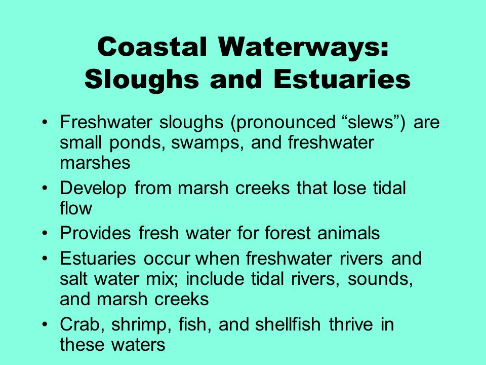 Coastal Waterways: Sloughs and Estuaries Freshwater sloughs (pronounced slews ) are small ponds, swamps, and freshwater marshes Develop from marsh creeks that lose tidal flow Provides fresh water for forest animals Estuaries occur when freshwater rivers and salt water mix; include tidal rivers, sounds, and marsh creeks Crab, shrimp, fish, and shellfish thrive in these waters