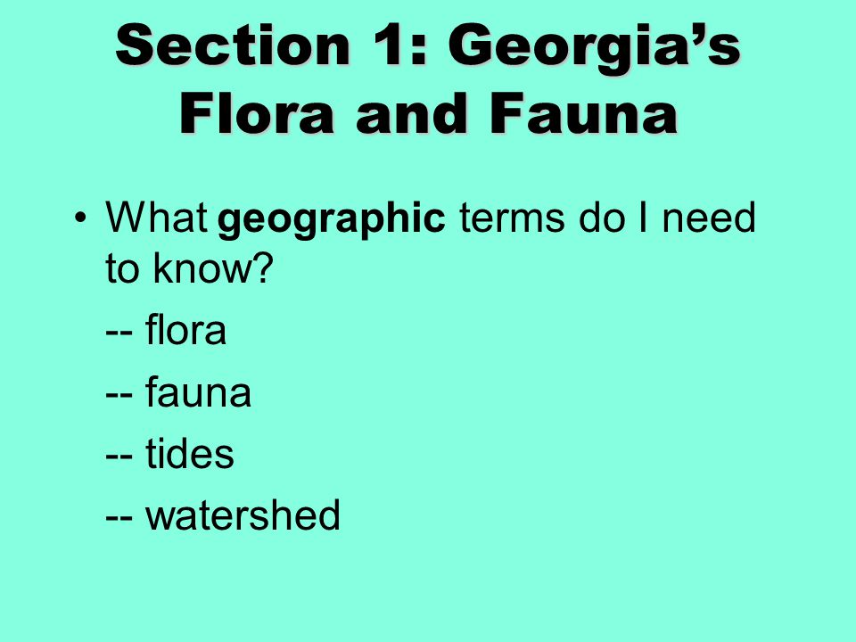 Section 1: Georgia's Flora and Fauna What geographic terms do I need to know.