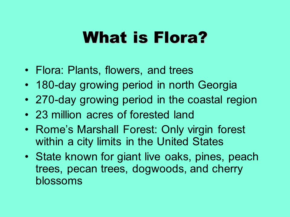 What is Flora.