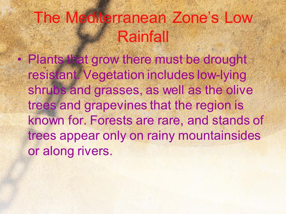 The Mediterranean Zone's Low Rainfall Plants that grow there must be drought resistant. Vegetation includes low-lying shrubs and grasses, as well as t