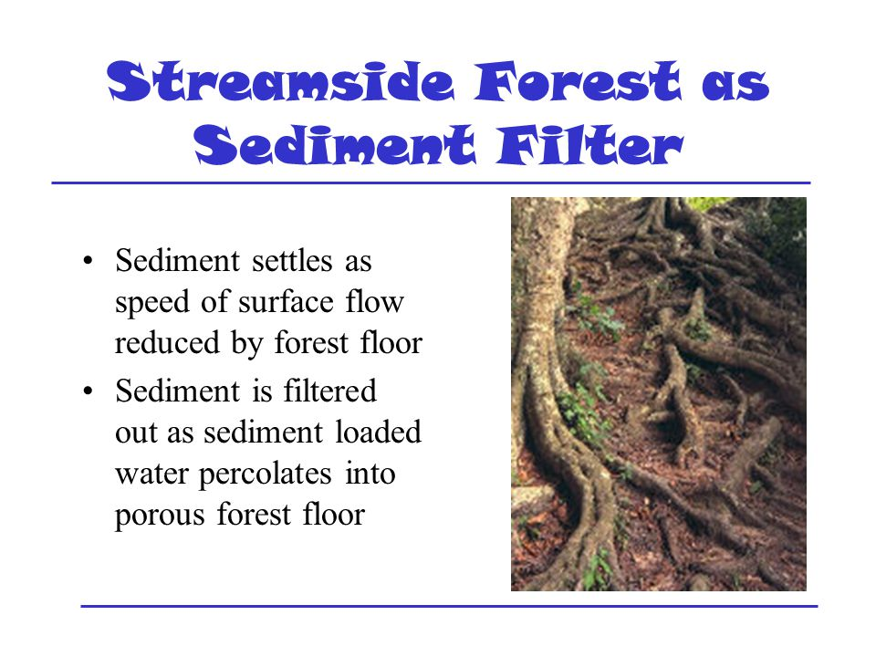 Streamside Forest as Sediment Filter Sediment settles as speed of surface flow reduced by forest floor Sediment is filtered out as sediment loaded water percolates into porous forest floor