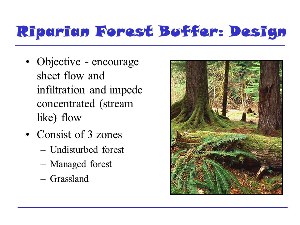 Riparian Forest Buffer: Design Objective - encourage sheet flow and infiltration and impede concentrated (stream like) flow Consist of 3 zones –Undisturbed forest –Managed forest –Grassland