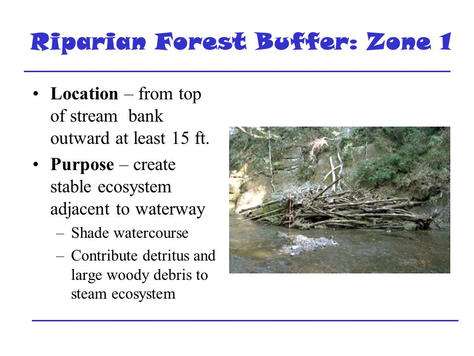 Riparian Forest Buffer: Zone 1 Location – from top of stream bank outward at least 15 ft.