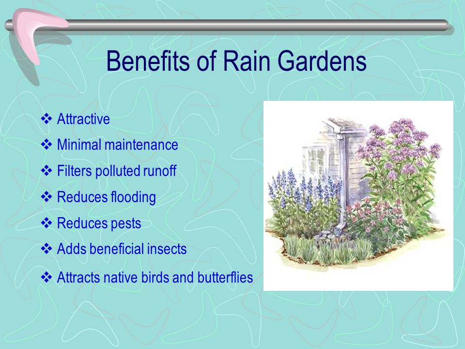 Benefits of Rain Gardens  Attractive  Minimal maintenance  Filters polluted runoff  Reduces flooding  Reduces pests  Adds beneficial insects  Attracts native birds and butterflies