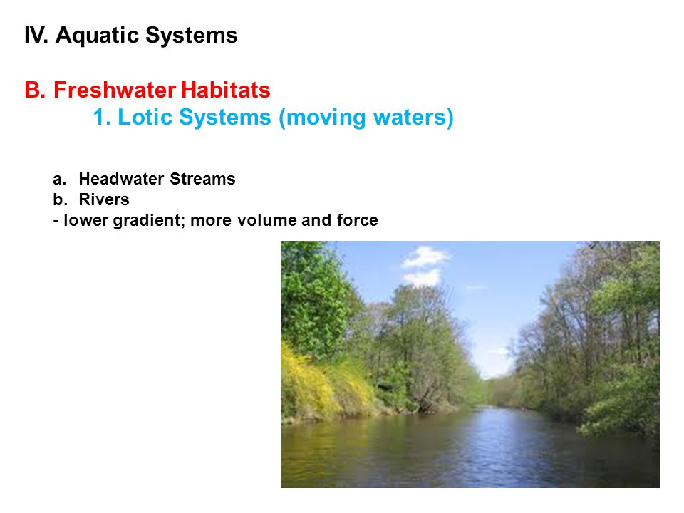 IV. Aquatic Systems B. Freshwater Habitats 1. Lotic Systems (moving waters) a.Headwater Streams b.Rivers - lower gradient; more volume and force
