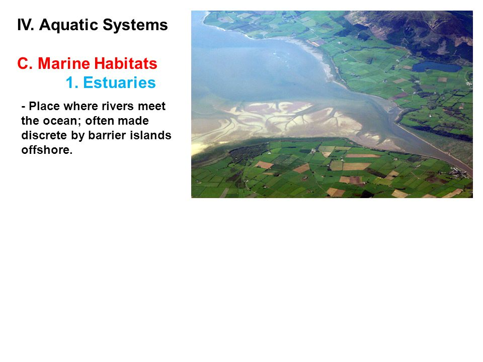 IV. Aquatic Systems C. Marine Habitats 1. Estuaries - Place where rivers meet the ocean; often made discrete by barrier islands offshore.