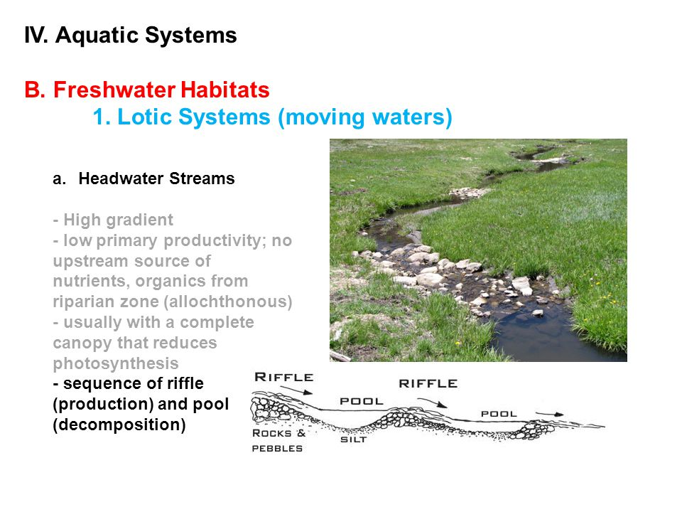 IV.Aquatic Systems B. Freshwater Habitats 1. Lotic Systems (moving waters) 2.