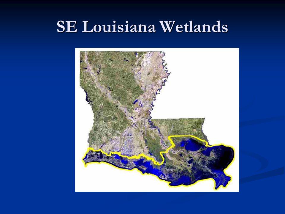 SE Louisiana Wetlands
