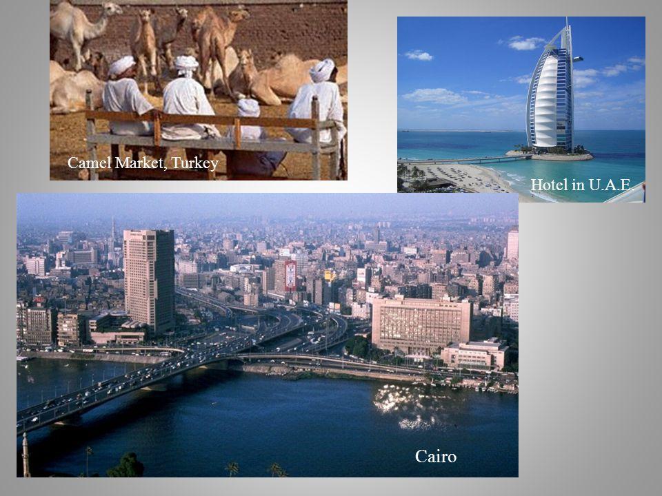 Hotel in U.A.E. Cairo Camel Market, Turkey