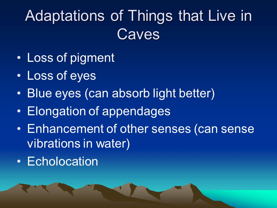 Adaptations of Things that Live in Caves Loss of pigment Loss of eyes Blue eyes (can absorb light better) Elongation of appendages Enhancement of othe