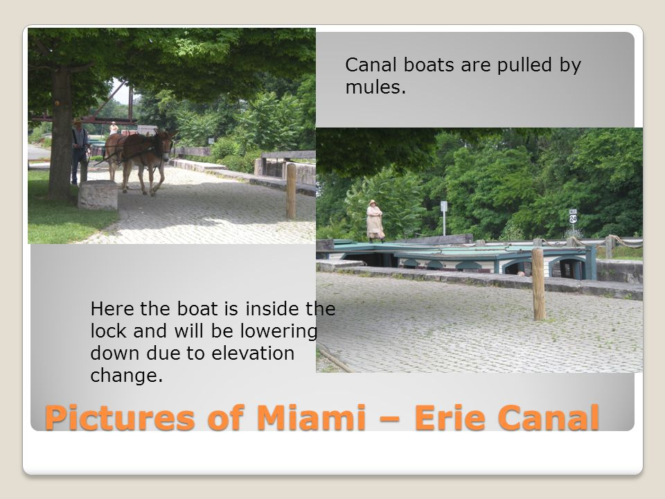 Pictures of Miami – Erie Canal Canal boats are pulled by mules. Here the boat is inside the lock and will be lowering down due to elevation change.