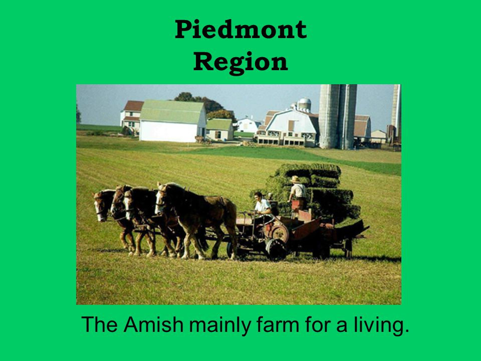 Piedmont Region The Amish mainly farm for a living.