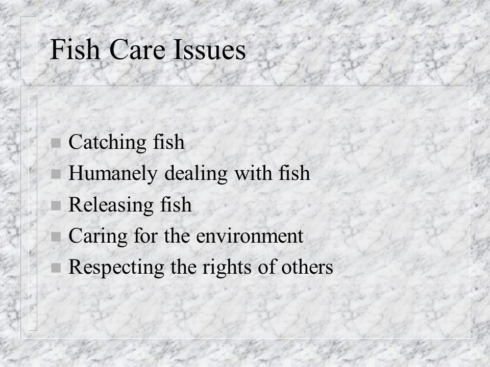 Fish Care Issues n Catching fish n Humanely dealing with fish n Releasing fish n Caring for the environment n Respecting the rights of others