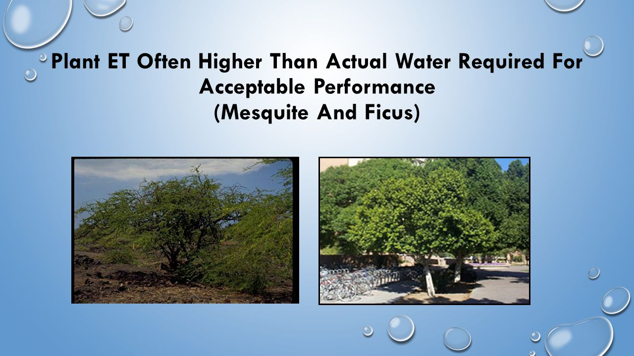 Plant ET Often Higher Than Actual Water Required For Acceptable Performance (Mesquite And Ficus)