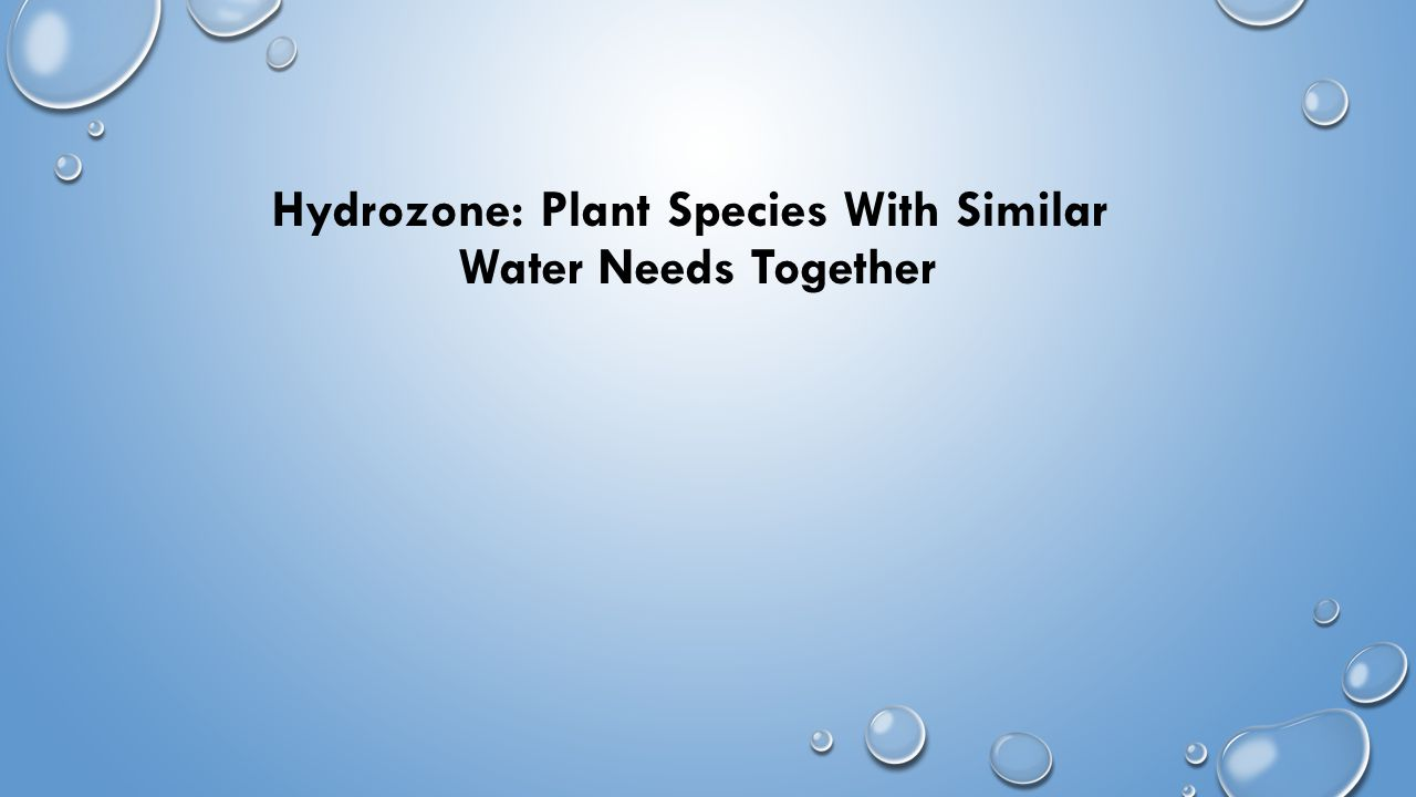 Hydrozone: Plant Species With Similar Water Needs Together