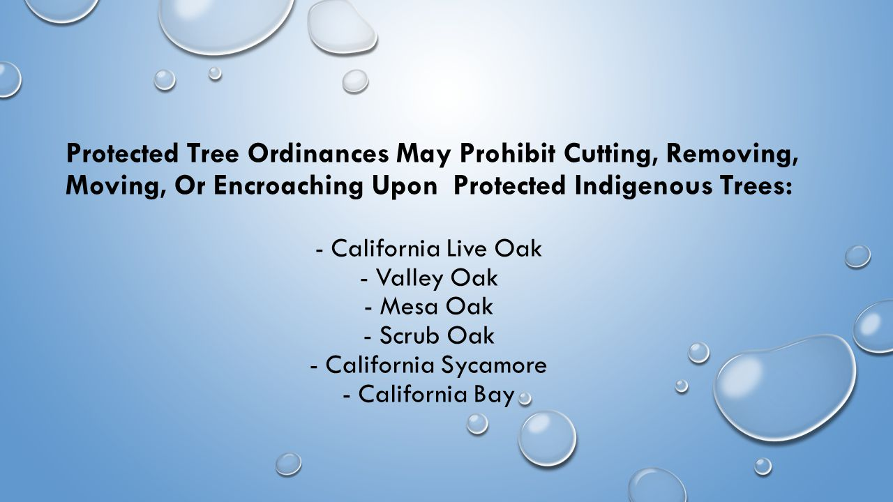 Protected Tree Ordinances May Prohibit Cutting, Removing, Moving, Or Encroaching Upon Protected Indigenous Trees: - California Live Oak - Valley Oak - Mesa Oak - Scrub Oak - California Sycamore - California Bay