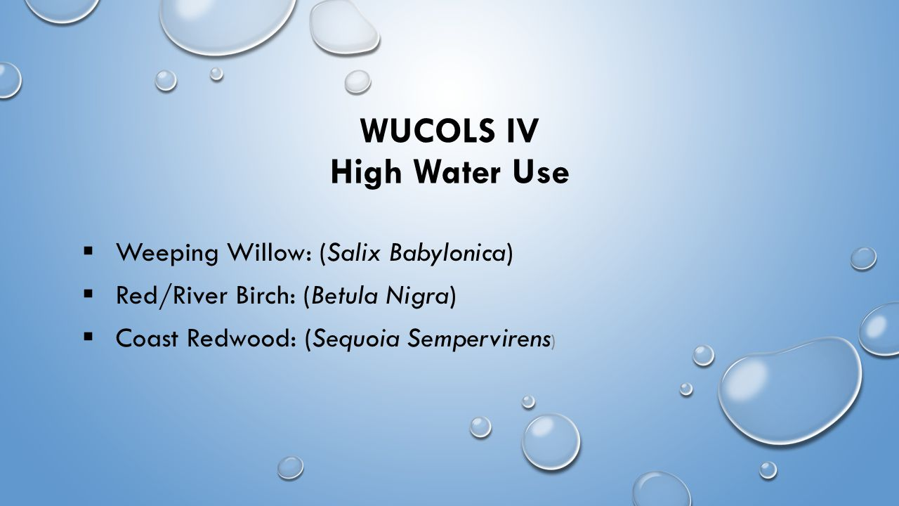 WUCOLS IV High Water Use  Weeping Willow: (Salix Babylonica)  Red/River Birch: (Betula Nigra)  Coast Redwood: (Sequoia Sempervirens )