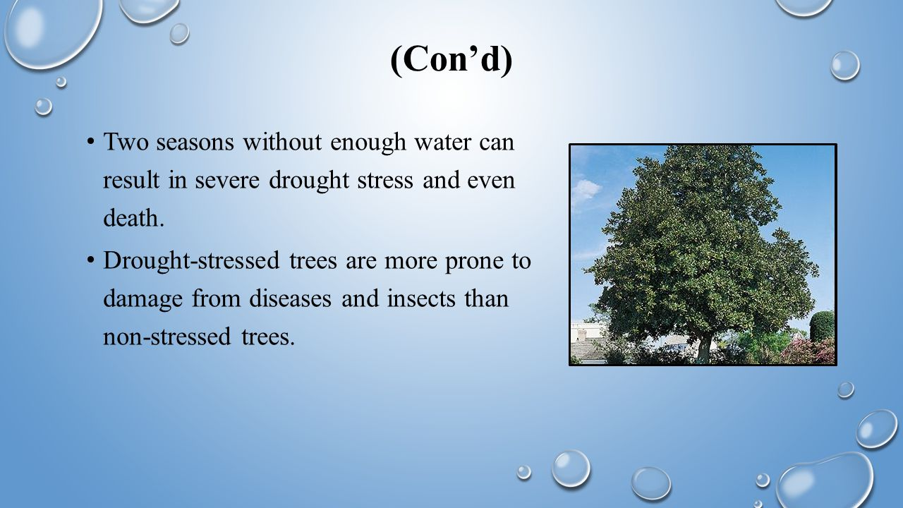 (Con'd) Two seasons without enough water can result in severe drought stress and even death.
