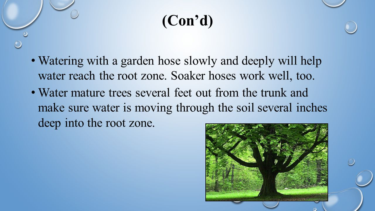 (Con'd) Watering with a garden hose slowly and deeply will help water reach the root zone.