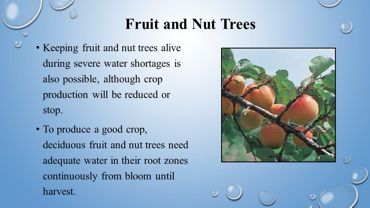 Fruit and Nut Trees Keeping fruit and nut trees alive during severe water shortages is also possible, although crop production will be reduced or stop.
