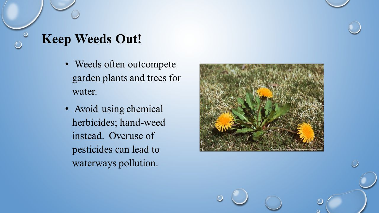 Keep Weeds Out. Weeds often outcompete garden plants and trees for water.