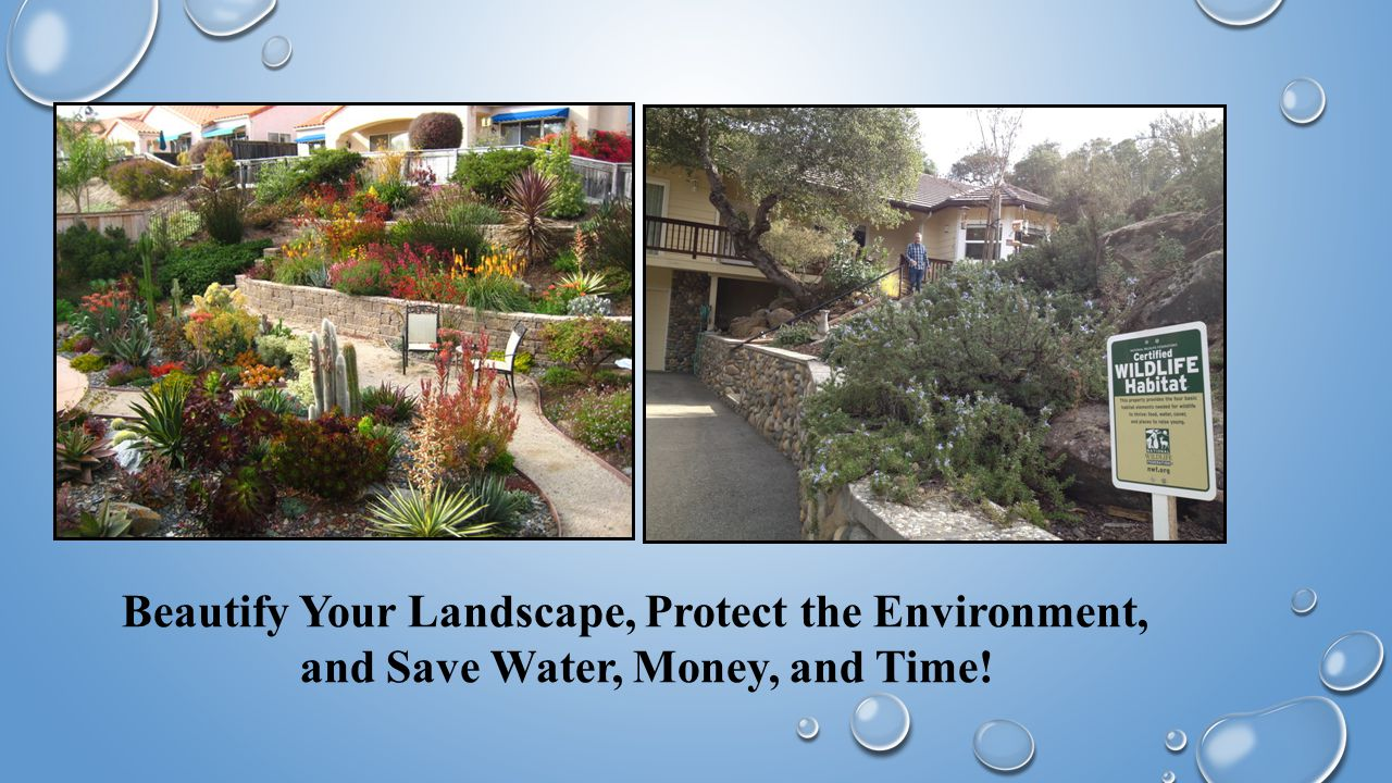 Beautify Your Landscape, Protect the Environment, and Save Water, Money, and Time!