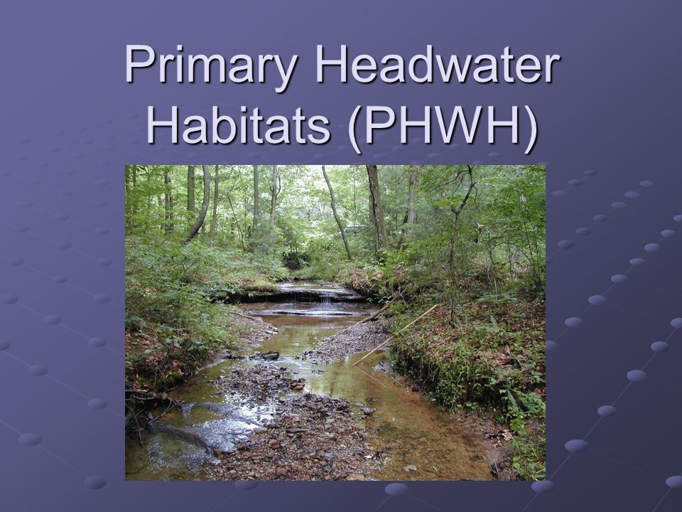 Primary Headwater Habitats (PHWH)