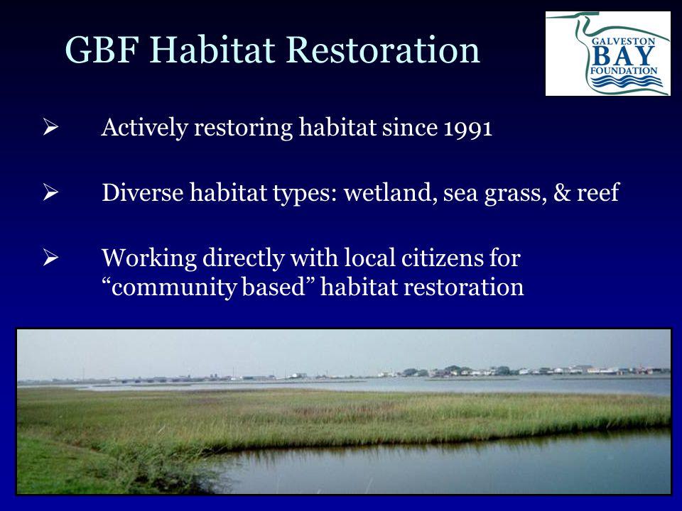 GBF Habitat Restoration  Actively restoring habitat since 1991  Diverse habitat types: wetland, sea grass, & reef  Working directly with local citizens for community based habitat restoration