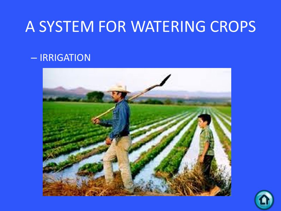 – IRRIGATION A SYSTEM FOR WATERING CROPS