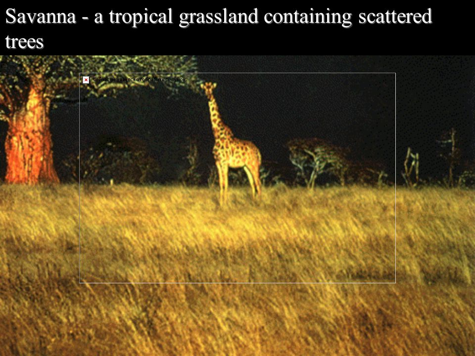Savanna - a tropical grassland containing scattered trees