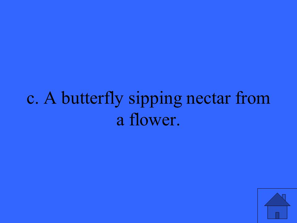 3 c. A butterfly sipping nectar from a flower.