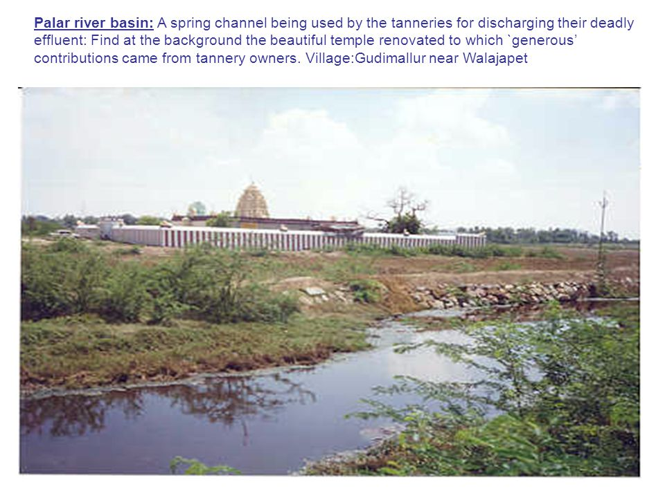 Palar river basin: A spring channel being used by the tanneries for discharging their deadly effluent: Find at the background the beautiful temple renovated to which `generous' contributions came from tannery owners.