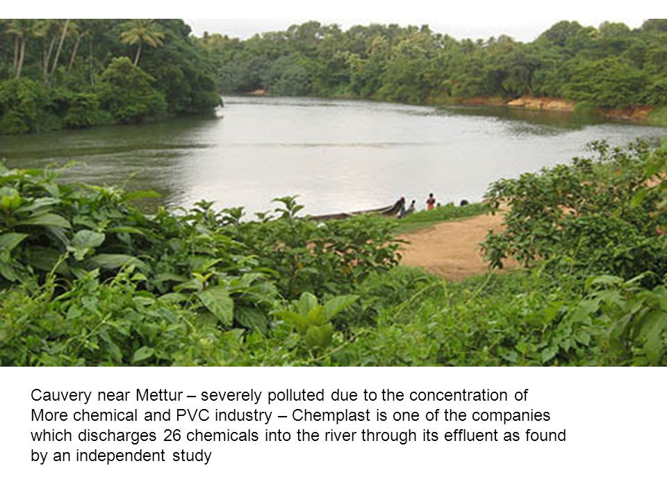 Cauvery near Mettur – severely polluted due to the concentration of More chemical and PVC industry – Chemplast is one of the companies which discharges 26 chemicals into the river through its effluent as found by an independent study