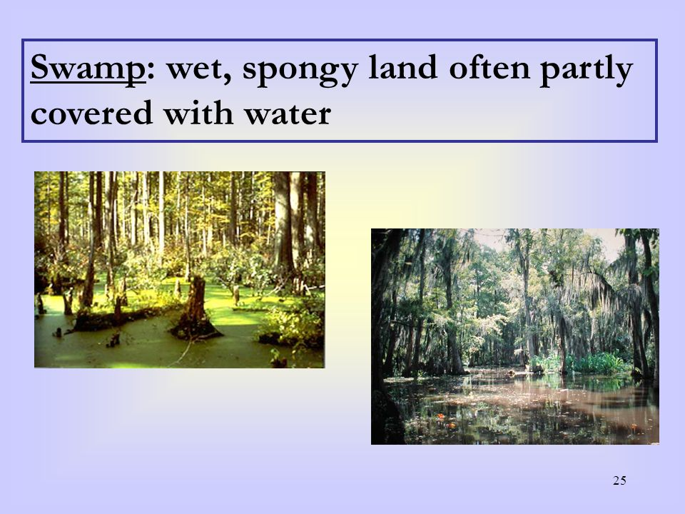 25 Swamp: wet, spongy land often partly covered with water