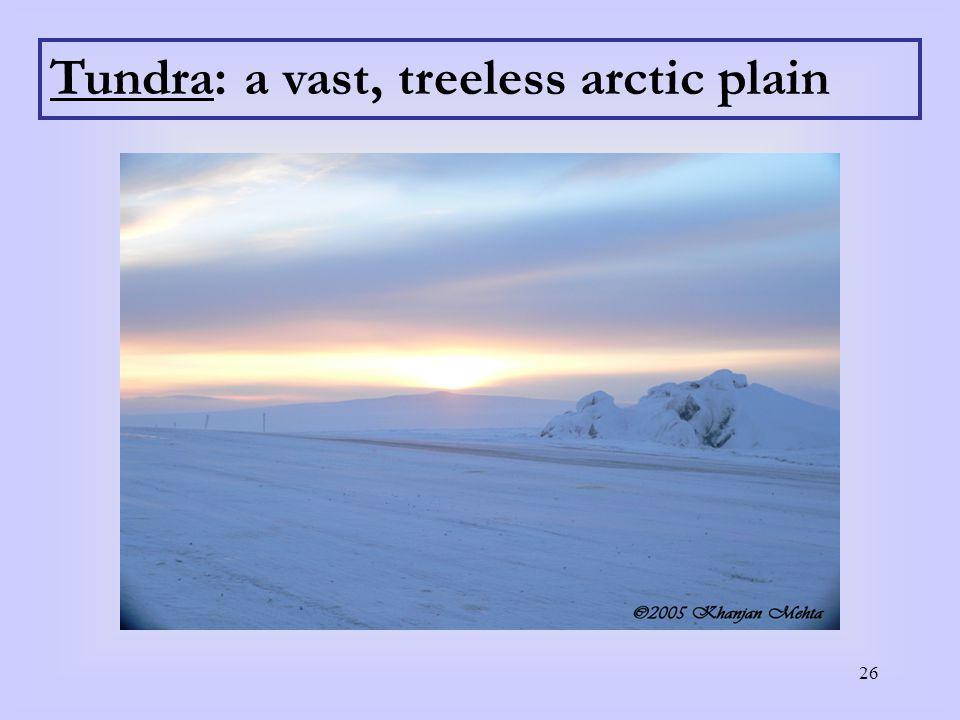 26 Tundra: a vast, treeless arctic plain