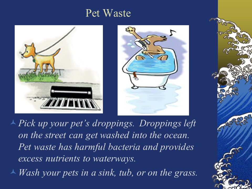 Pet Waste Pick up your pet's droppings. Droppings left on the street can get washed into the ocean.