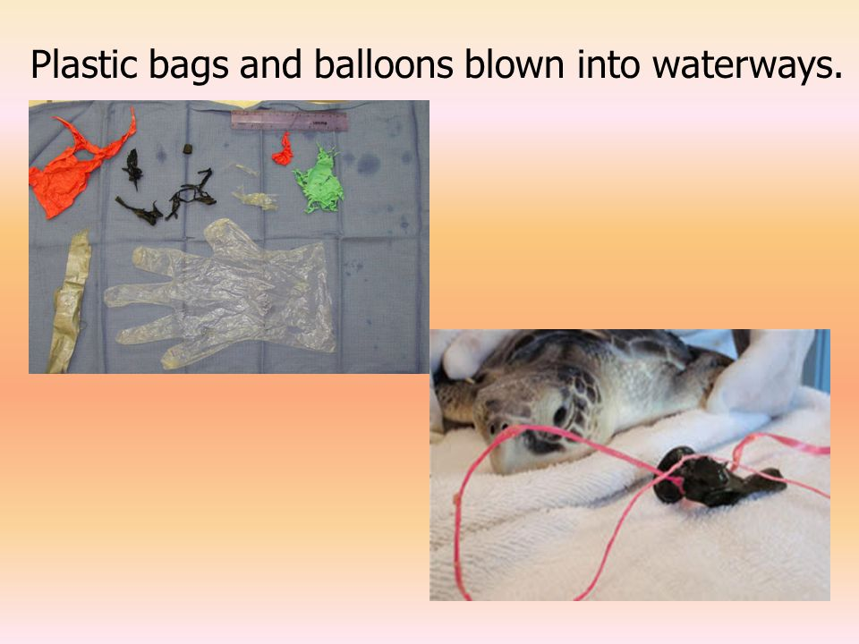 Plastic bags and balloons blown into waterways.