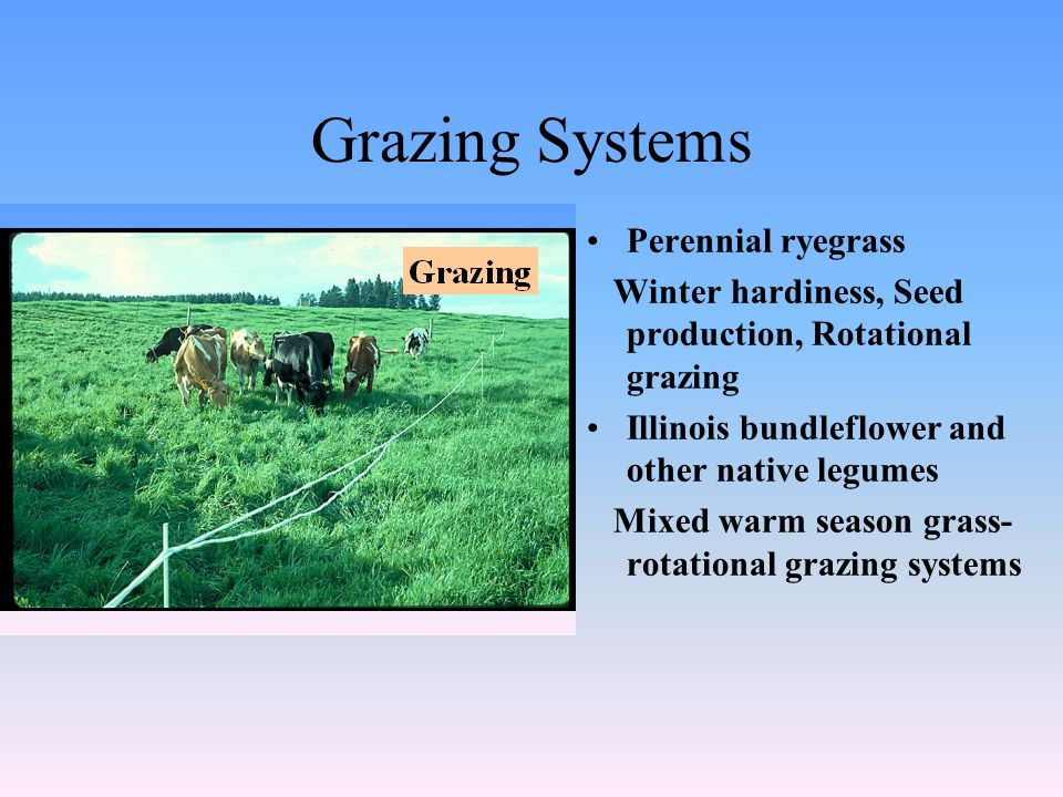 Grazing Systems Perennial ryegrass Winter hardiness, Seed production, Rotational grazing Illinois bundleflower and other native legumes Mixed warm season grass- rotational grazing systems