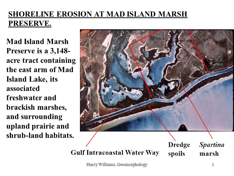 Harry Williams, Geomorphology1 SHORELINE EROSION AT MAD ISLAND MARSH PRESERVE. Mad Island Marsh Preserve is a 3,148- acre tract containing the east ar