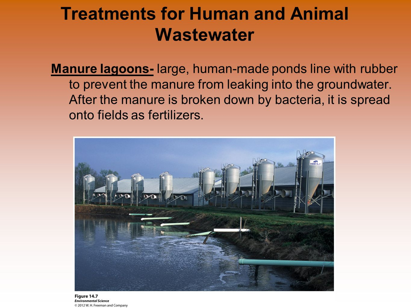 Treatments for Human and Animal Wastewater Manure lagoons- large, human-made ponds line with rubber to prevent the manure from leaking into the ground