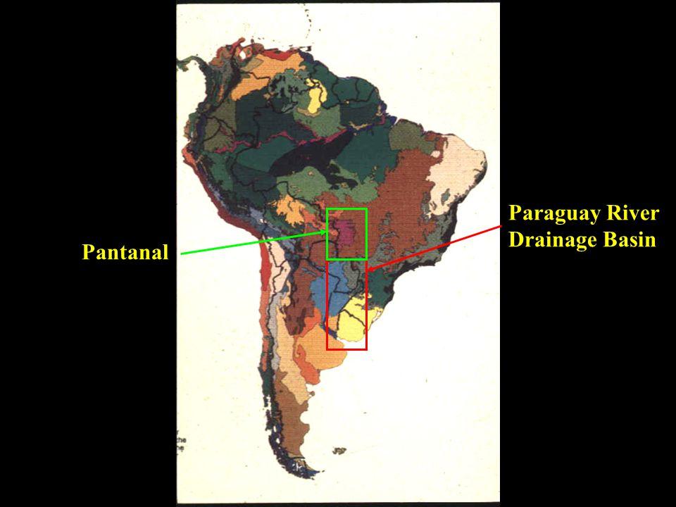 Paraguay River Drainage Basin Pantanal