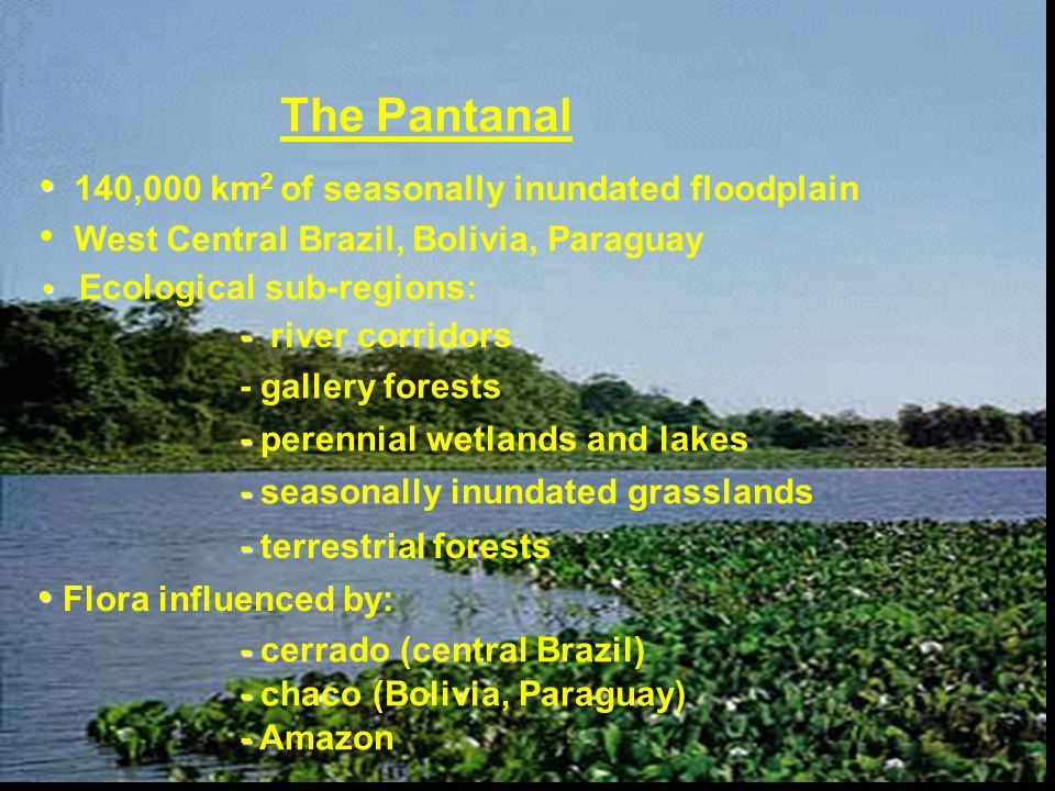 The Pantanal 140,000 km 2 of seasonally inundated floodplain West Central Brazil, Bolivia, Paraguay Ecological sub-regions: - - river corridors - gallery forests - - perennial wetlands and lakes - - seasonally inundated grasslands - - terrestrial forests Flora influenced by: - - cerrado (central Brazil) - - chaco (Bolivia, Paraguay) - - Amazon